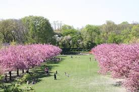 japanese Garden  at Brooklyn's Botanical Gardens